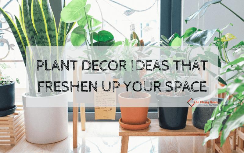 plant decor ideas